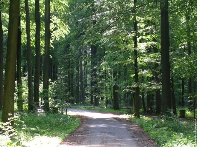 Floresta de Soignes - Bruxelas - Bélgica